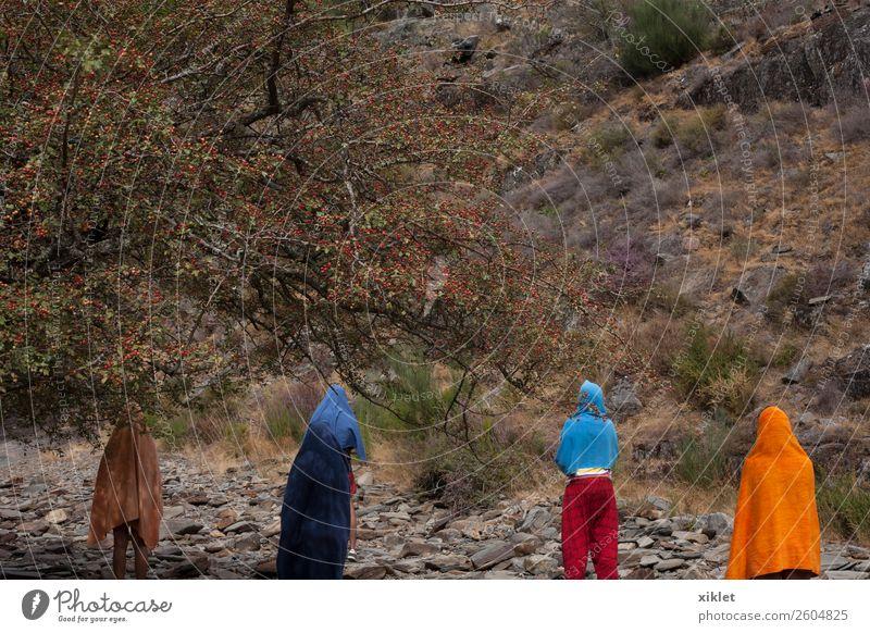 Gruppe Mensch Menschengruppe Luft Herbst Wind Baum Berge u. Gebirge Schutzbekleidung Badehose Hut genießen lachen laufen Spielen Flüssigkeit frei Freundlichkeit