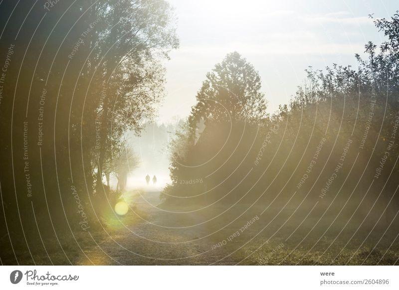 Hikers in the morning mist Natur Fitness laufen Leben Beginn Sunbeams copy space dust field glitter haze hiking landscape lane light Misthaufen misty