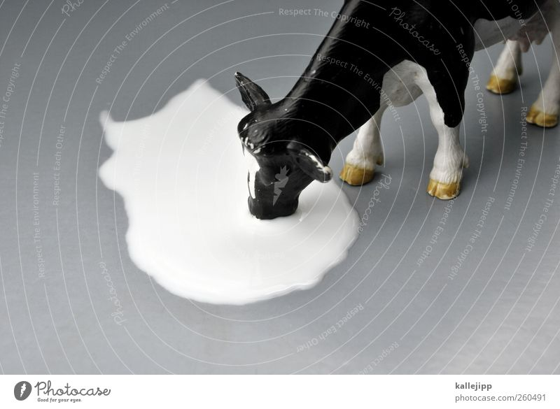 milchbubi Tier trinken Spielzeug Landwirtschaft Kuh Statue Milch Forstwirtschaft Rind