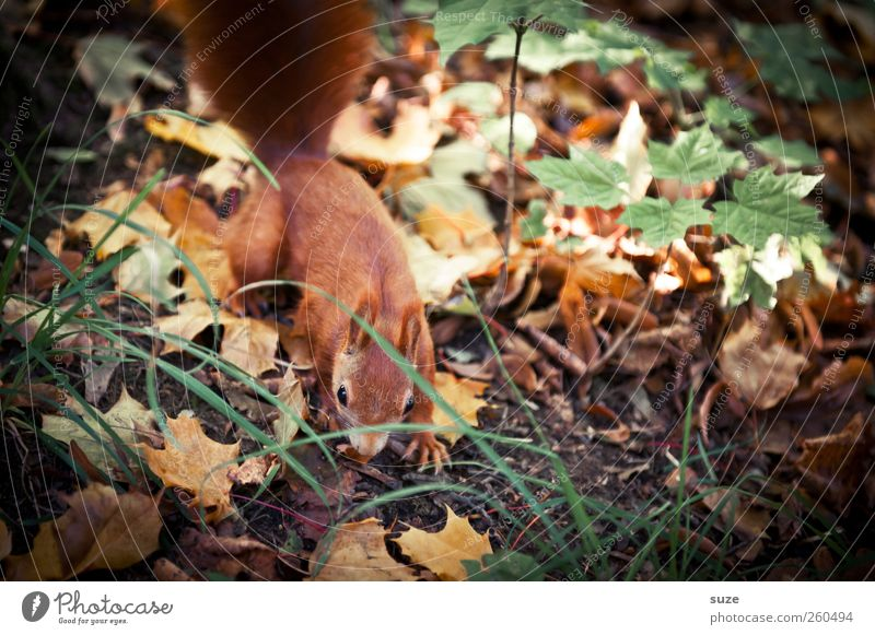 Laubfrosch Natur grün rot Blatt Tier Wald Umwelt Wiese Herbst klein braun Wildtier Schönes Wetter beobachten niedlich Suche
