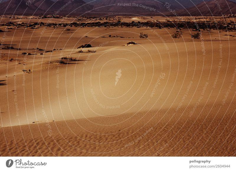 Desert Natur Landschaft Erde Sand Sommer Schönes Wetter Wüste heiß hell Wärme Ferien & Urlaub & Reisen Tourismus Farbfoto Außenaufnahme Menschenleer Tag