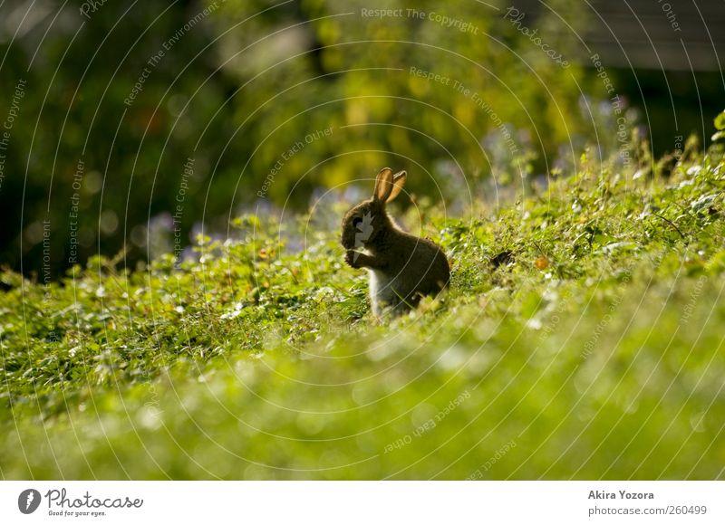 *räusper* Natur grün Sommer Tier schwarz gelb Wiese Gras Frühling grau braun Idylle sitzen Wildtier stehen Sträucher