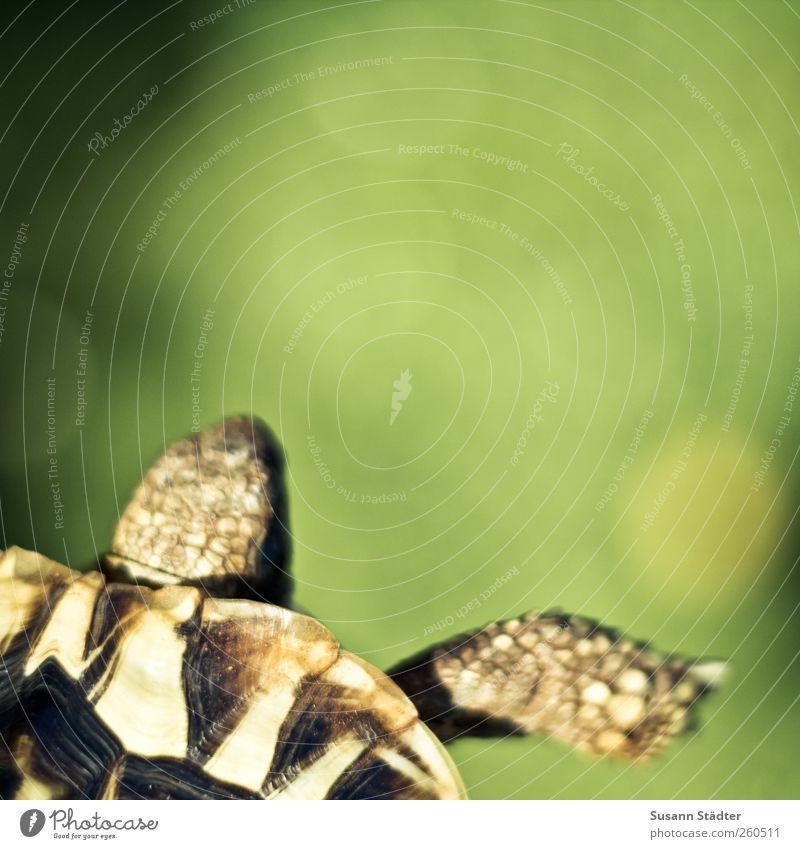 ein Bier! Umwelt Pflanze Urelemente Schönes Wetter Gras Garten Tier Wildtier Jagd Kröte Schildkrötenpanzer Panzer Rücken tierisch Wiese Farbfoto mehrfarbig
