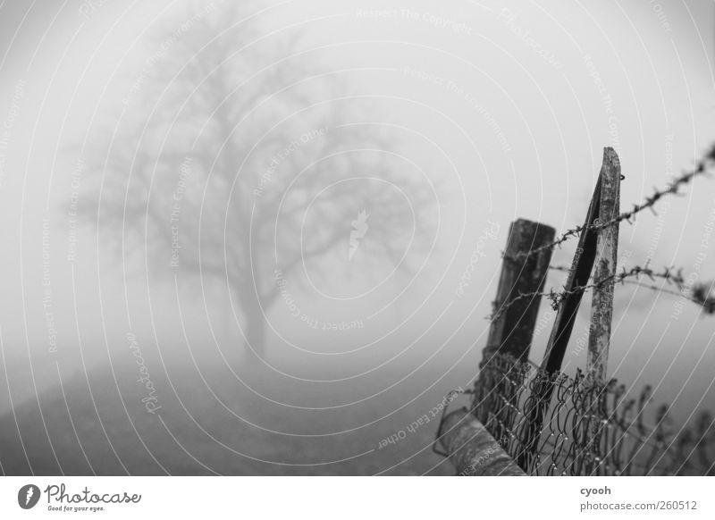 grau in grau Landschaft Nebel Baum Holz trist gefangen Zaun Stacheldrahtzaun driften Grenze Trauer Einsamkeit Menschenleer alt Maschendrahtzaun abweisend