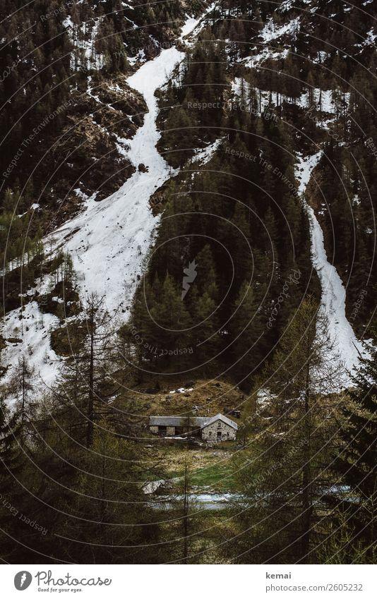 Leben am Berg ruhig Abenteuer Freiheit Natur Landschaft Eis Frost Schnee Baum Wald Hügel Berge u. Gebirge Schweiz Haus Hütte alt authentisch dunkel grün