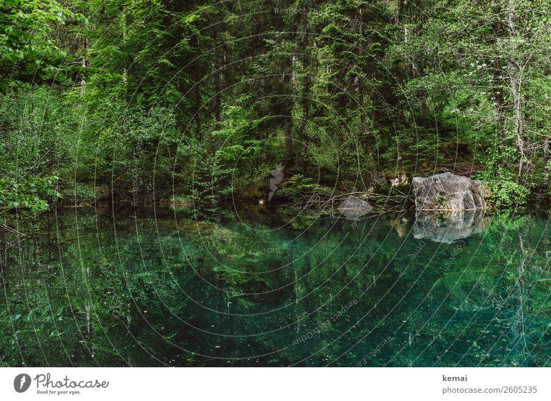 Grüntöne Natur Ferien & Urlaub & Reisen Sommer grün Wasser Landschaft Baum Erholung ruhig Wald Küste Freiheit außergewöhnlich Felsen Ausflug Zufriedenheit