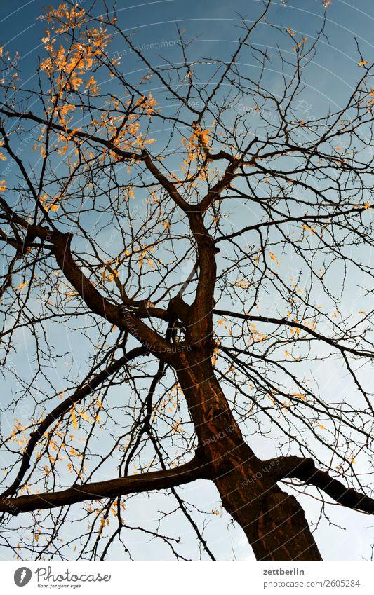 Saisonende Ast Baum Blatt Froschperspektive goldener oktober Herbstlaub Himmel Himmel (Jenseits) Licht Oktober Sonne Wolkenloser Himmel Zweig Nebensaison Wetter