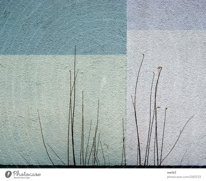 Wohnwelten blau Stadt Pflanze schwarz Haus kalt Wand klein Farbstoff Mauer Zusammensein Fassade warten natürlich Design Wachstum