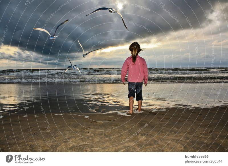 Eine Reise ins Ungewisse Mensch Kind Ferien & Urlaub & Reisen Mädchen Sommer Meer Strand Tier Ferne Leben Freiheit Küste Horizont Kindheit Vogel Wildtier