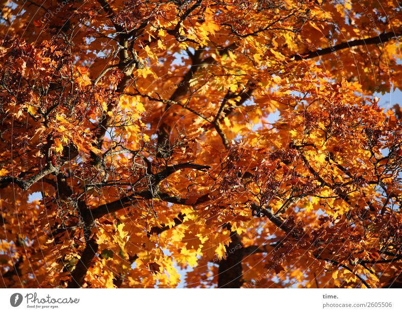 Rauschendes Fest Natur Pflanze schön rot Baum Wald Leben Wärme gelb Herbst Umwelt Tod Zusammensein braun oben leuchten