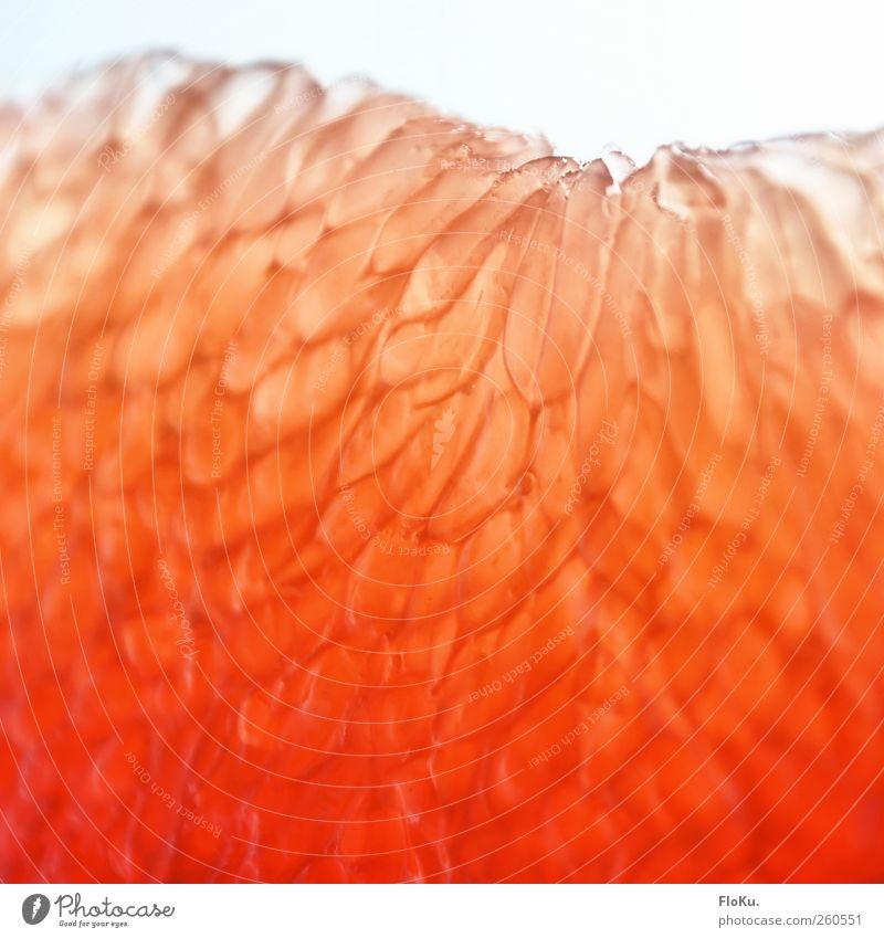 What the Fruit rot Ernährung Lebensmittel Frucht rosa natürlich frisch süß lecker Bioprodukte saftig Vegetarische Ernährung sauer Fruchtfleisch Zitrusfrüchte