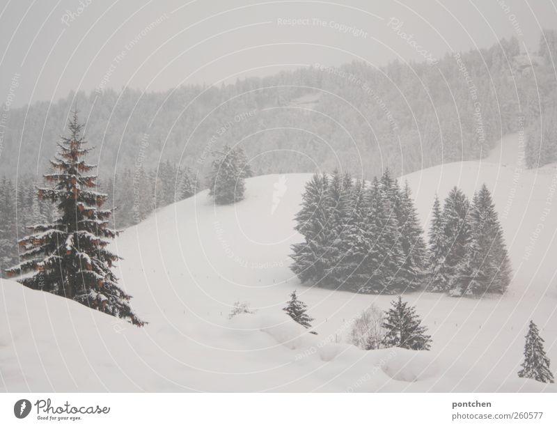 frisch aus dem allgäu Natur weiß grün Baum Pflanze Winter Wald kalt Schnee Landschaft Schneefall Eis Nebel Frost Tanne Schneelandschaft
