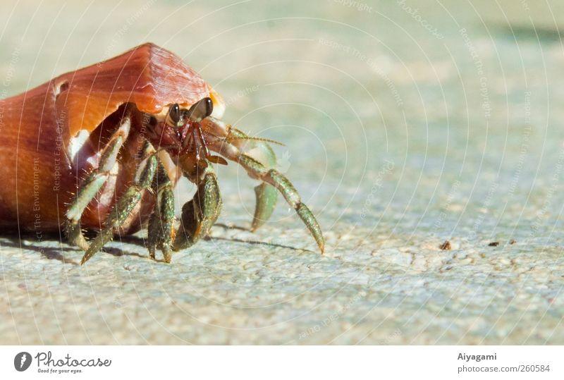 Natur Tier Bewegung klein Stein Wildtier frei Insel Sicherheit Tiergesicht Schutz Umzug (Wohnungswechsel) stark exotisch hart krabbeln