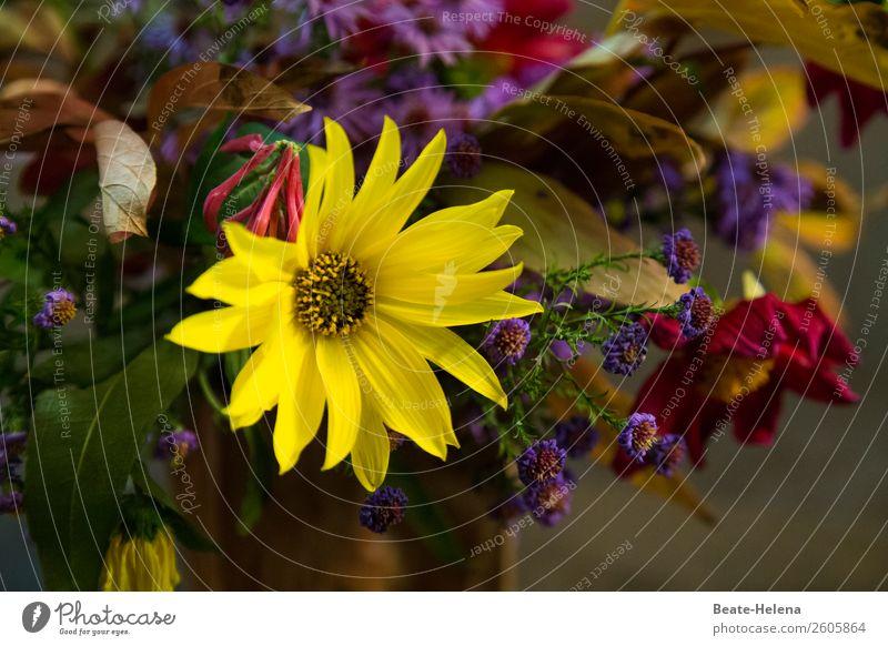 Ein kleiner Blumengruß Stil schön Feste & Feiern Geburtstag Natur Blatt Blüte Blühend Duft Blick blau gelb grün rot Gefühle Stimmung Freude Glück Fröhlichkeit