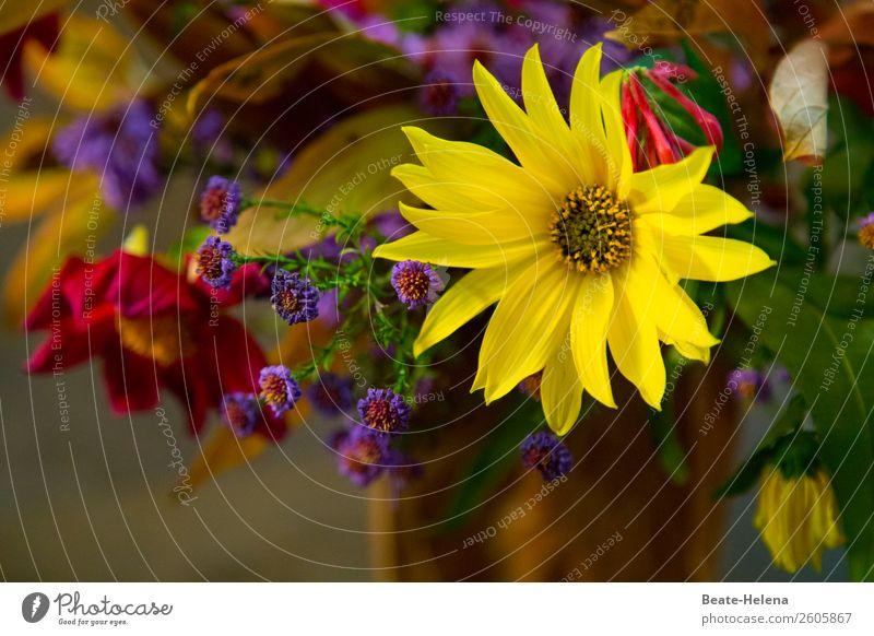 Kleiner Blumengruß Lifestyle Pflanze Blüte Dekoration & Verzierung Blumenstrauß Blühend genießen schön natürlich mehrfarbig gelb Gefühle Fröhlichkeit ästhetisch