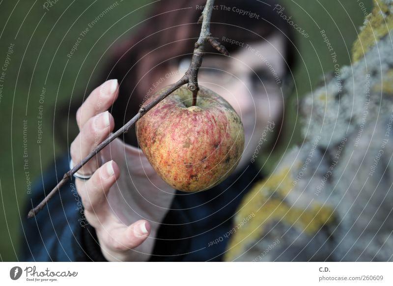 Der letzte Apfel Garten feminin Gesundheit Ast Frau Hand Baum Baumrinde grün Finger Gesicht greifen pflücken Lebensmittel Bioprodukte Natur Farbfoto