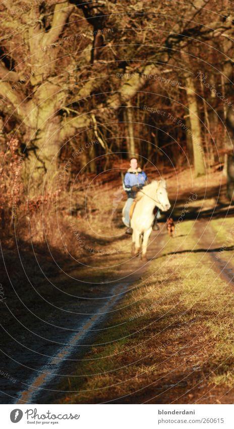 Pony!! Hund Mensch Jugendliche weiß Pflanze Baum ruhig Tier Wald Herbst Freiheit Glück träumen Körper maskulin Freizeit & Hobby