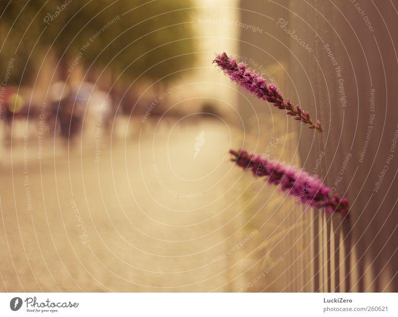 Liebesgrüße aus Washington Sommer Sonne Natur Pflanze Herbst Schönes Wetter Wärme Blume Blüte Wildpflanze Park Zaun Wege & Pfade Stein Metall Stahl Blühend