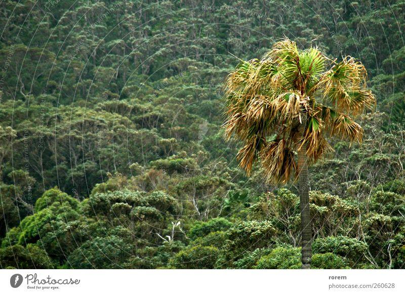 Tropen exotisch schön Ferien & Urlaub & Reisen Sommer Pflanze Wärme Baum Sträucher Blatt Urwald natürlich grün tropisch Paradies sonnig Resort Kokosnuss