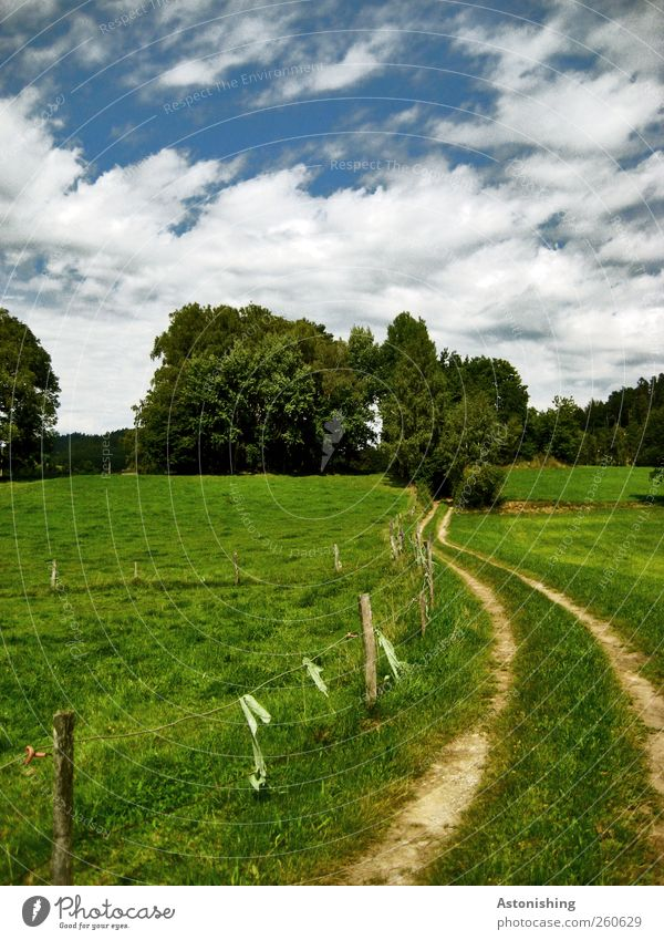 der Weg hinein Umwelt Natur Landschaft Pflanze Himmel Wolken Sommer Wetter Schönes Wetter Baum Gras Sträucher Grünpflanze Wiese Hügel Wege & Pfade blau grün