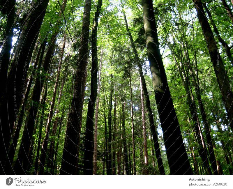 dunkler Wald Himmel Natur weiß grün Baum Pflanze Sommer Blatt schwarz Umwelt dunkel Landschaft Wärme hell Wetter