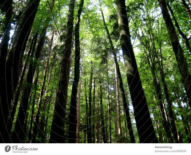 dunkler Wald Umwelt Natur Landschaft Pflanze Himmel Sommer Wetter Schönes Wetter Wärme Baum Sträucher dunkel hell hoch grün schwarz weiß Wachstum geschlossen