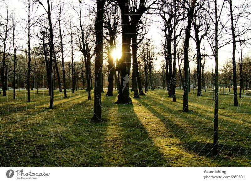 durchblinzeln Umwelt Natur Landschaft Pflanze Himmel Sonne Sonnenaufgang Sonnenuntergang Sonnenlicht Winter Wetter Schönes Wetter Wärme Baum Garten Park Wiese