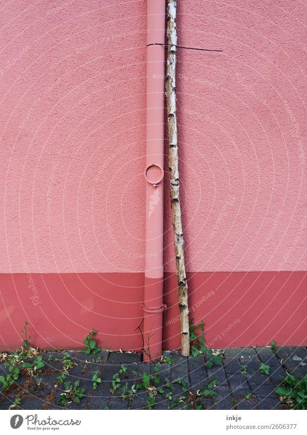 starke Bindung Baum Birke Baumstamm Menschenleer Mauer Wand Fassade Regenrinne dünn fest lang rosa Partnerschaft gebunden Kabelbinder Maibaum Farbfoto