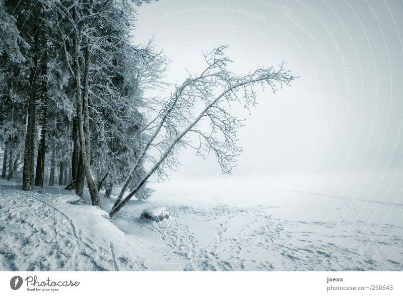 Neugierde Natur Landschaft Wolken Winter schlechtes Wetter Unwetter Nebel Eis Frost Schnee Wald See hell kalt blau schwarz weiß Idylle Mummelsee gefroren