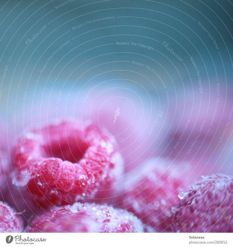 kaltes Früchtchen Winter kalt klein Gesundheit Eis Frucht Lebensmittel frisch Ernährung Frost gefroren Appetit & Hunger Bioprodukte frieren Himbeeren Gefühle