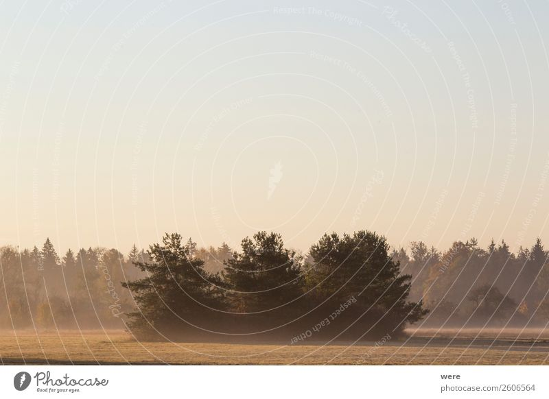 Trees on a meadow in the morning mist Natur ästhetisch ruhig Zufriedenheit cloudy sky copy space dust field landscape light misty misty fields morning sun