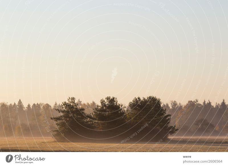 Trees on a meadow in the morning mist Natur ruhig Zufriedenheit ästhetisch