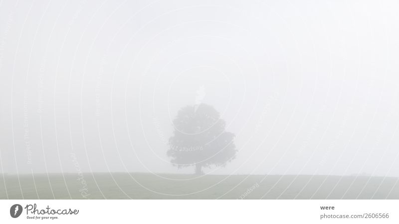 Tree on a meadow in the morning mist Natur Nebel stehen cloudy sky copy space dust field landscape light Misthaufen misty misty fields morning sun nobody