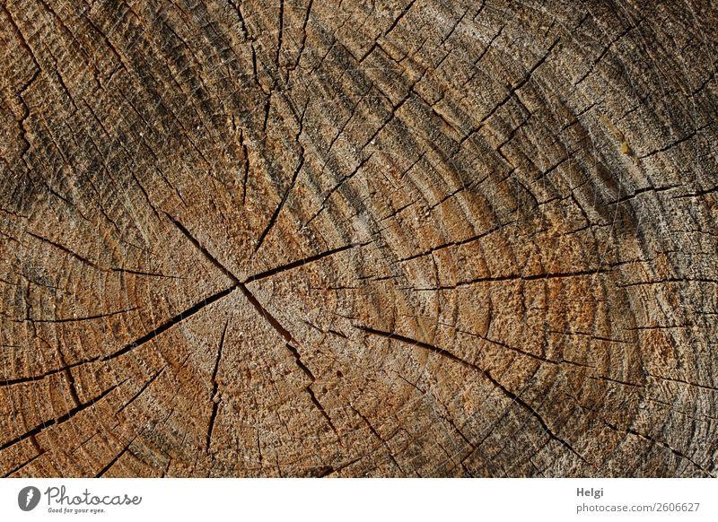Schnittfläche eines Baumstammes mit Jahresringen und Rissen Umwelt Natur Pflanze Wald Holz alt dehydrieren authentisch einzigartig natürlich braun grau schwarz