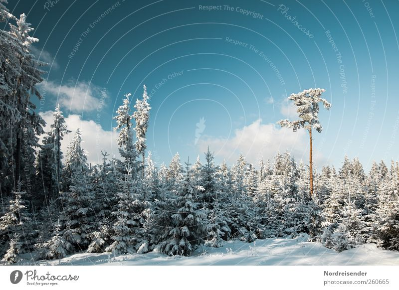 Samenspender Natur blau weiß Pflanze Erholung Landschaft Wolken Winter Wald kalt Schnee Stimmung Eis Klima Schönes Wetter Ausflug