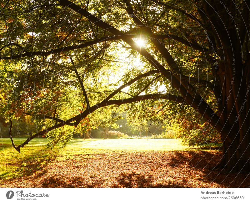 Sonnenaufgang im Park Ferien & Urlaub & Reisen Sommer Natur Sonnenuntergang Herbst Baum gelb autumn Hintergrundbild beams beautiful beauty blue color colorful