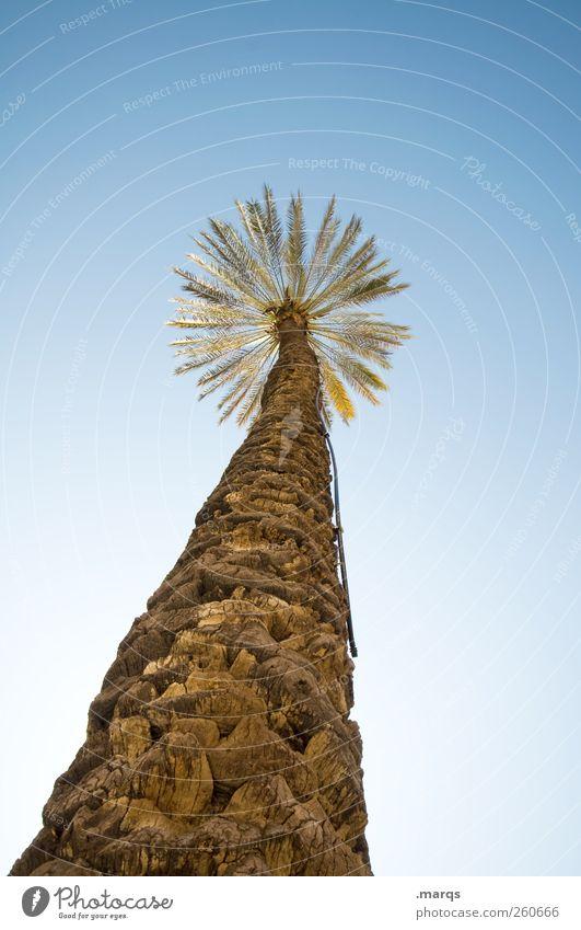 Sonnenschirm Ferien & Urlaub & Reisen Tourismus Ferne Sommer Sommerurlaub Natur Wolkenloser Himmel Klima exotisch Palme einfach schön Perspektive Farbfoto