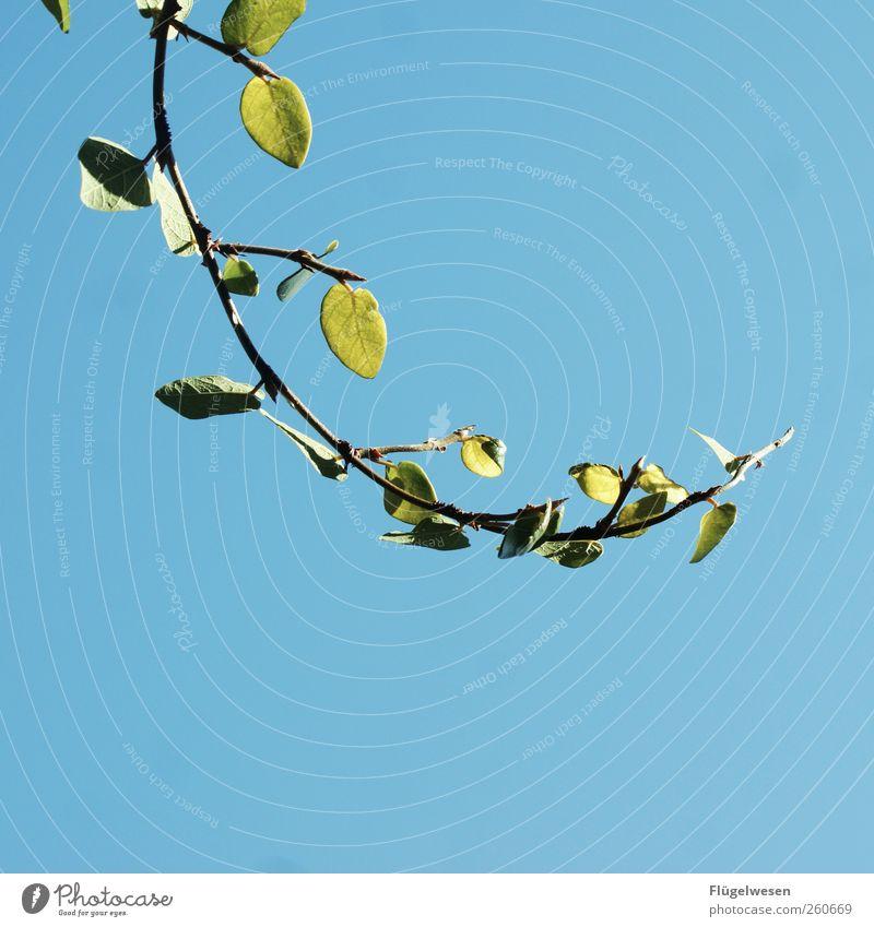 Planzengruß aus dem Himmel Pflanze Himmel (Jenseits) grün Sommer Blume Einsamkeit Blatt Blüte Gras Horizont Wachstum Sträucher Hoffnung Spanien Zweig