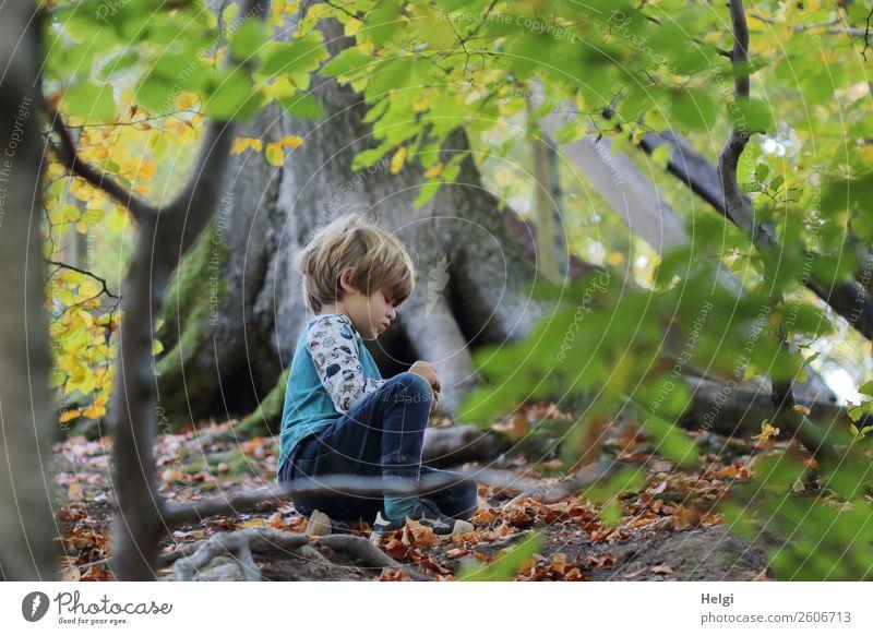 kleiner Junge sitzt auf dem Waldboden und entdeckt Schätze der Natur Mensch maskulin Kind Kindheit 1 3-8 Jahre Umwelt Landschaft Pflanze Herbst Baum Wildpflanze