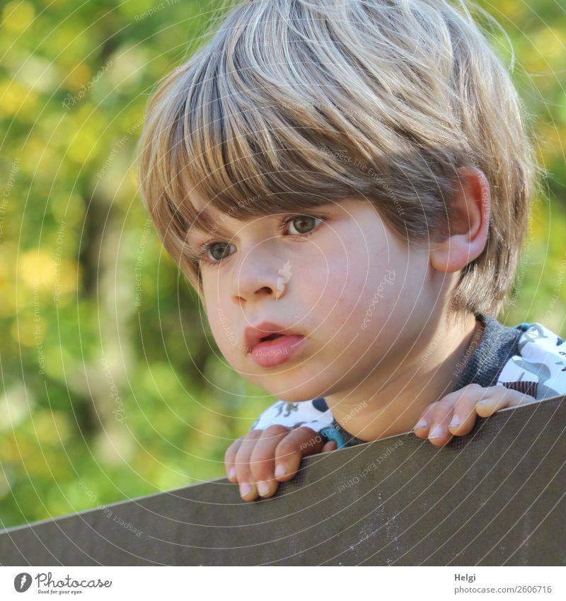 Porträt eines kleinen Jungen, der aufmerksam über einen Zaun schaut Mensch maskulin Kind Kindheit Kopf Haare & Frisuren Gesicht Finger 1 3-8 Jahre beobachten