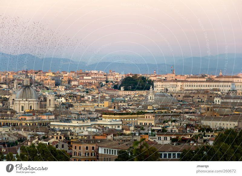 Rom schön Ferien & Urlaub & Reisen Haus Gebäude Stimmung Vogel Tourismus Italien Schönes Wetter Sommerurlaub Wolkenloser Himmel Schwarm Städtereise