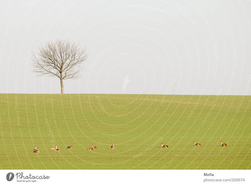 Siesta Umwelt Natur Landschaft Wildtier Reh Tiergruppe Herde Erholung liegen frei Zusammensein klein natürlich grün Freiheit Idylle Pause ruhig ausruhend