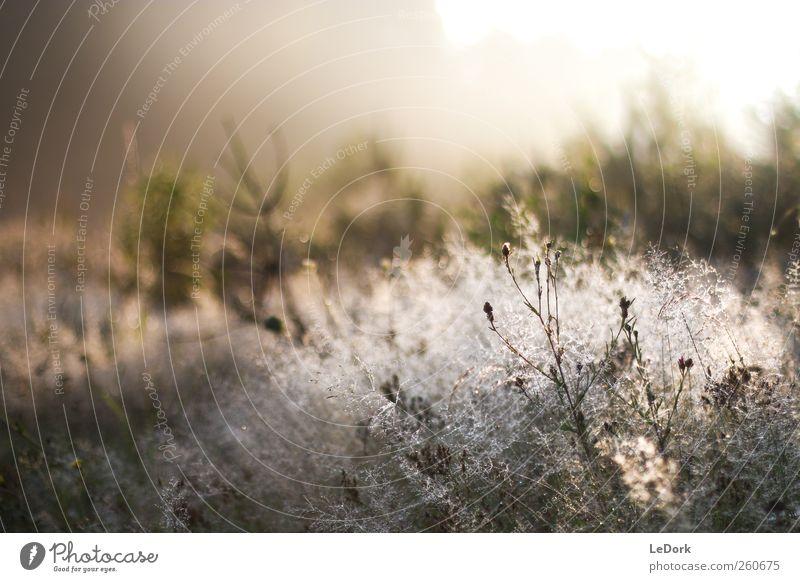 a plain morning Meditation Landschaft Pflanze Wassertropfen Sonnenaufgang Sonnenuntergang Sonnenlicht Schönes Wetter Wiese glänzend genießen