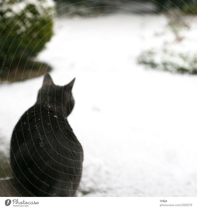der erste Schnee Katze Winter Tier Umwelt kalt Gefühle Wege & Pfade Garten Schneefall Stimmung Park Tierjunges Eis warten Klima