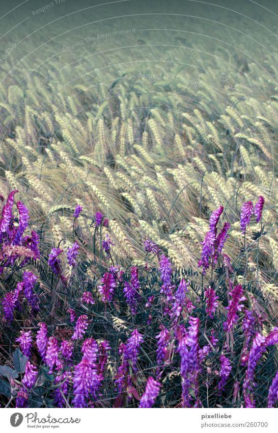 Warmer Feldwind Natur Pflanze Blume ruhig Ferne Umwelt Wiese Landschaft Bewegung Frühling Luft Wind natürlich Blühend Duft
