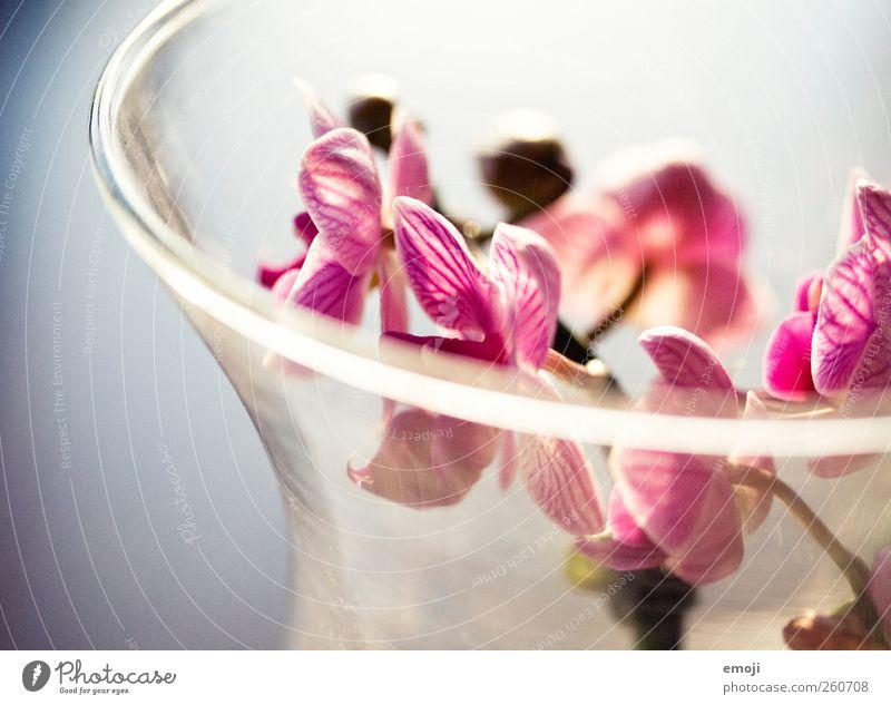 Valentin Pflanze Blume Orchidee Blüte schön rosa Frühling Dekoration & Verzierung Glas Farbfoto Innenaufnahme Nahaufnahme Detailaufnahme Makroaufnahme