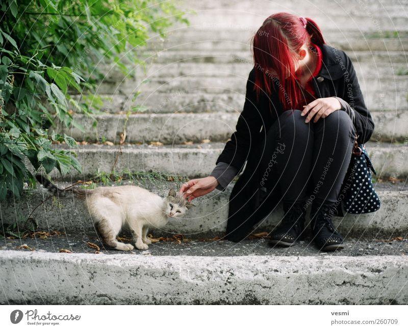 Freundschaft Katze Mensch Frau Jugendliche Tier Erwachsene feminin Leben Junge Frau 18-30 Jahre sitzen niedlich streichen Schutz Kontakt Freundlichkeit