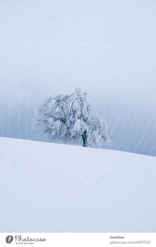 Wintertree - verschneiter Baum auf dem Schauinsland Himmel Natur Ferien & Urlaub & Reisen Pflanze blau schön weiß Landschaft Einsamkeit ruhig Ferne