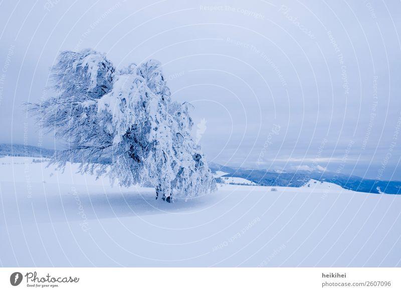Winterwonderland Schnee Baum kalt Eis Frost Raureif weiß Himmel Natur blau Ast Zweig Außenaufnahme gefroren frieren Eiskristall Dezember Wintertag
