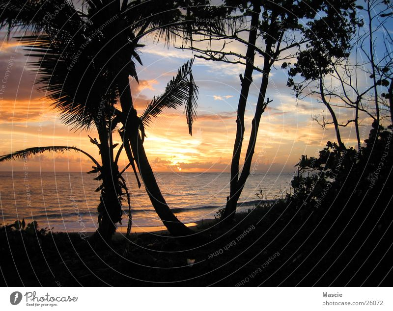 Tequila Sunrise Wolken Palme Karibisches Meer Baum Strand Horizont Wellen dunkel Romantik Ferien & Urlaub & Reisen Aussicht Ferne blenden Sonne Treppe Wasser